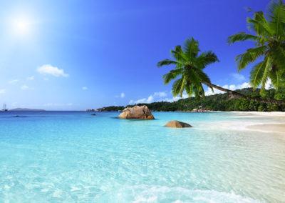 mauritius-beach-palm-trees